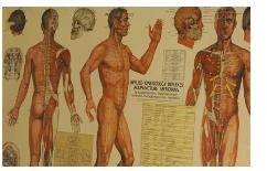 AppliedKinesiology